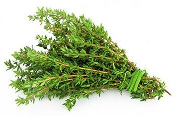 Тимьяновым эфирным маслом обладает ранозаживляющим действием, снимает зуд и ускоряет заживление.